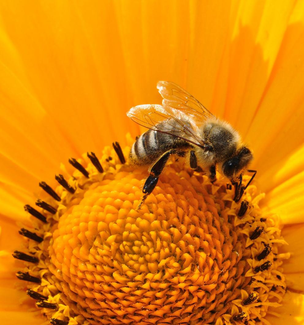 "Seminario ""La cera d'api"""